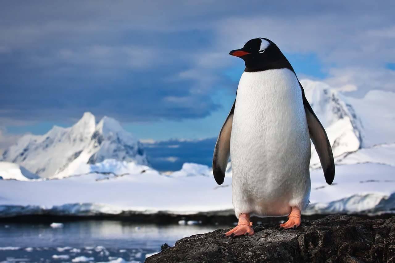 企鵝演算法-Google演算法-看見流量成長-零一行銷_1