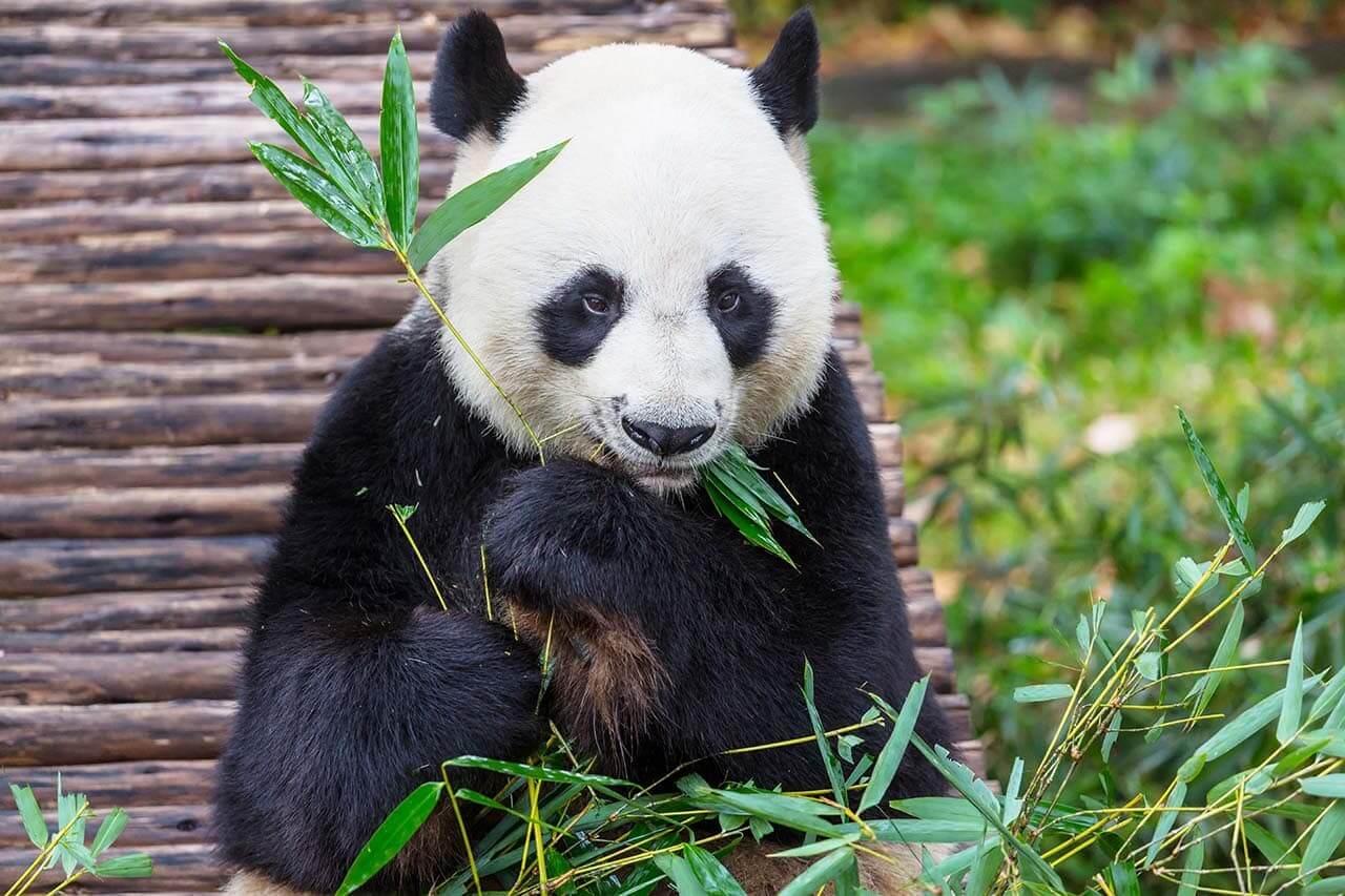 熊貓演算法-Google演算法-看見流量成長-零一行銷_1