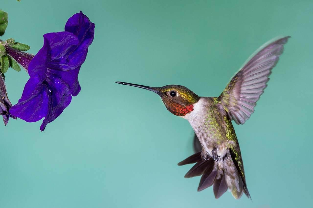 蜂鳥演算法-Google演算法-看見流量成長-零一行銷_2